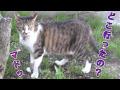 小春日和に妹分を探す猫